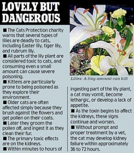 White Lilies Poisonous To Cats